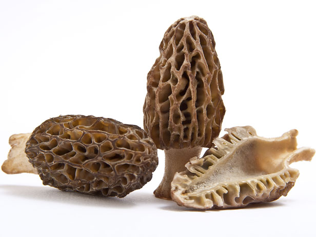 "Everyone has a list of their own favorite ingredients, but there is one item that I know will bring a teary look of appreciation to just about every chef I encounter, and that is the morel mushroom. So much so that when I reached out to Iron Chef Alex Guarnaschelli for her opinion of the morel, she referred to it as the ""sacred mushroom."""