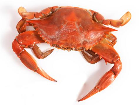 A Guide to Buying and Cooking Crab
