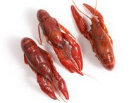 A Guide for Buying and Cooking Crayfish