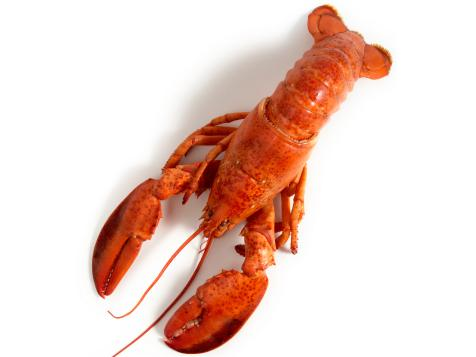 A Guide for Buying and Cooking Lobster