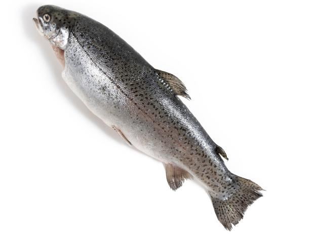 A Guide to Cooking Trout