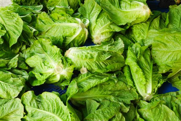 How To Keep Lettuce Fresh Help Around